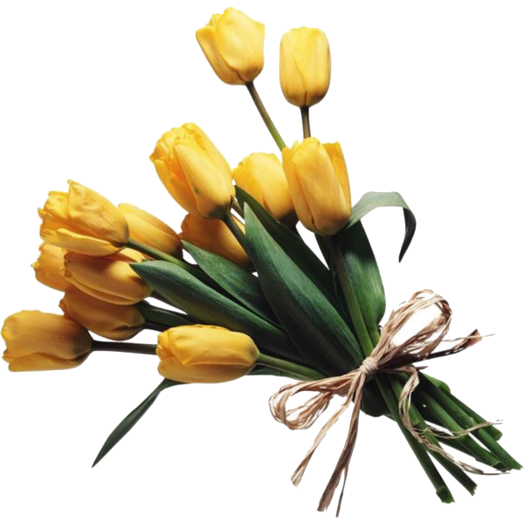 Yellow tulips flowers bouquet polyvore moodboard filler