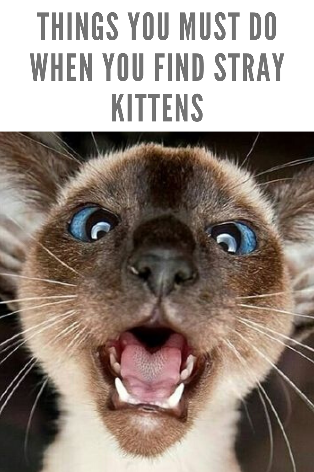 Things You Must Do When You Find Stray Kittens In 2020 Funny Cats Kittens Cats
