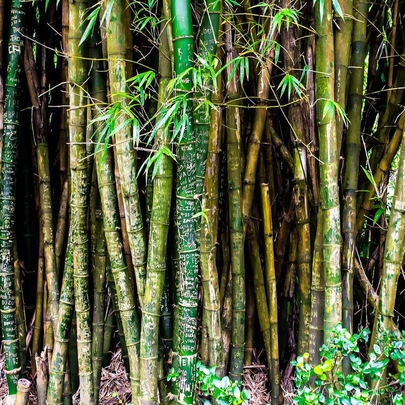 Bamboo extract is the next big thing in Korean skincare. The pandas' favorite food has hydrating, anti-inflammatory and antioxidant properties that help skin stay softer, healthy, and younger-looking. Click through to find out what else bamboo does for the skin and why the Koreans are adding it everywhere.