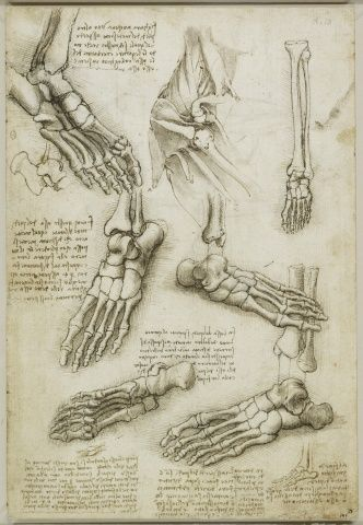 Leonardo Da Vinci Anatomy References Daily Art Creative Anatomy
