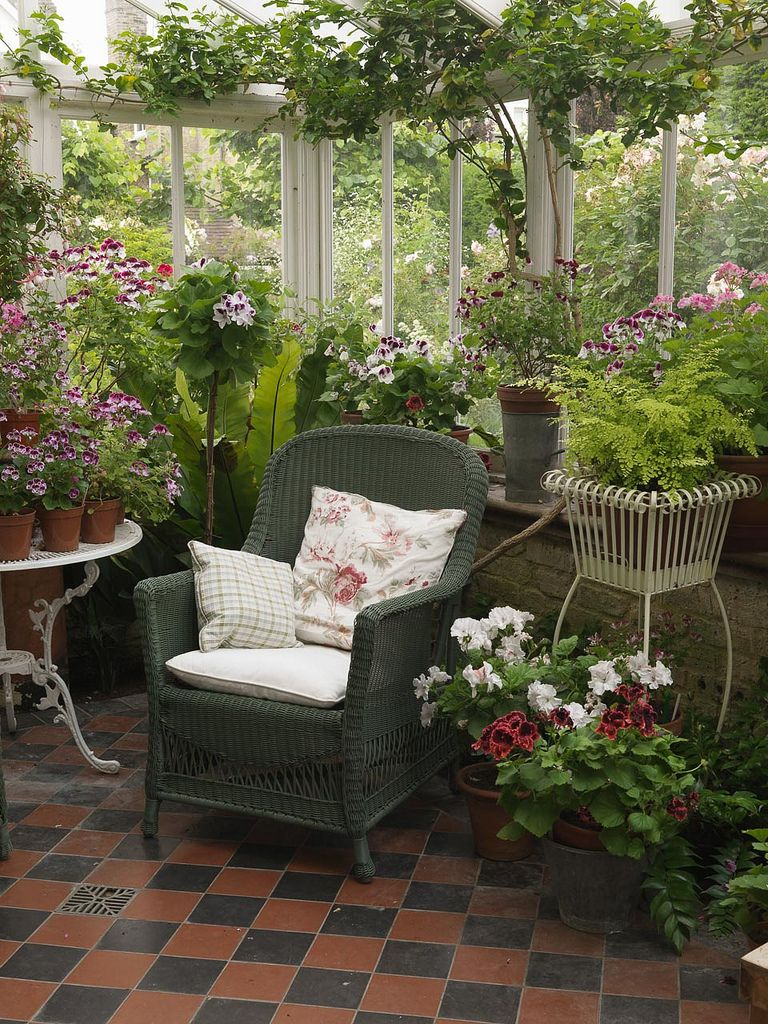 north facing conservatory with collection of pelargoniums and