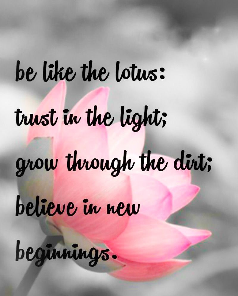 Believe Love Lets Try Love Lets Try Love Lotus Flower Quote