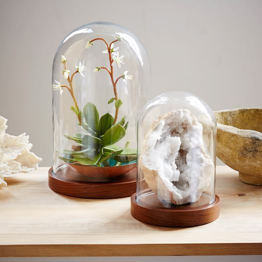 Wood + Glass Display Cloches | west elm