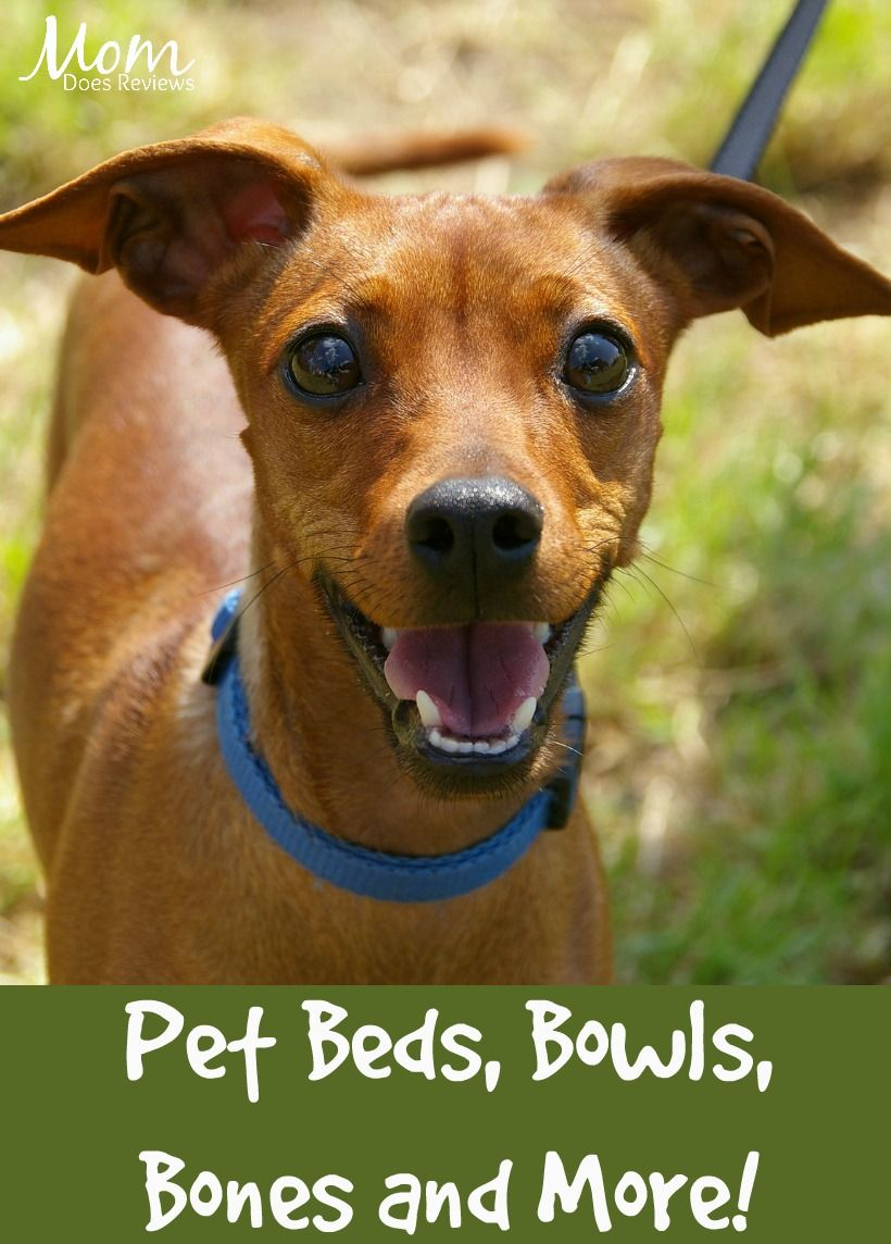 Pet Beds, Bowls, Bones and More! (With images) Moving