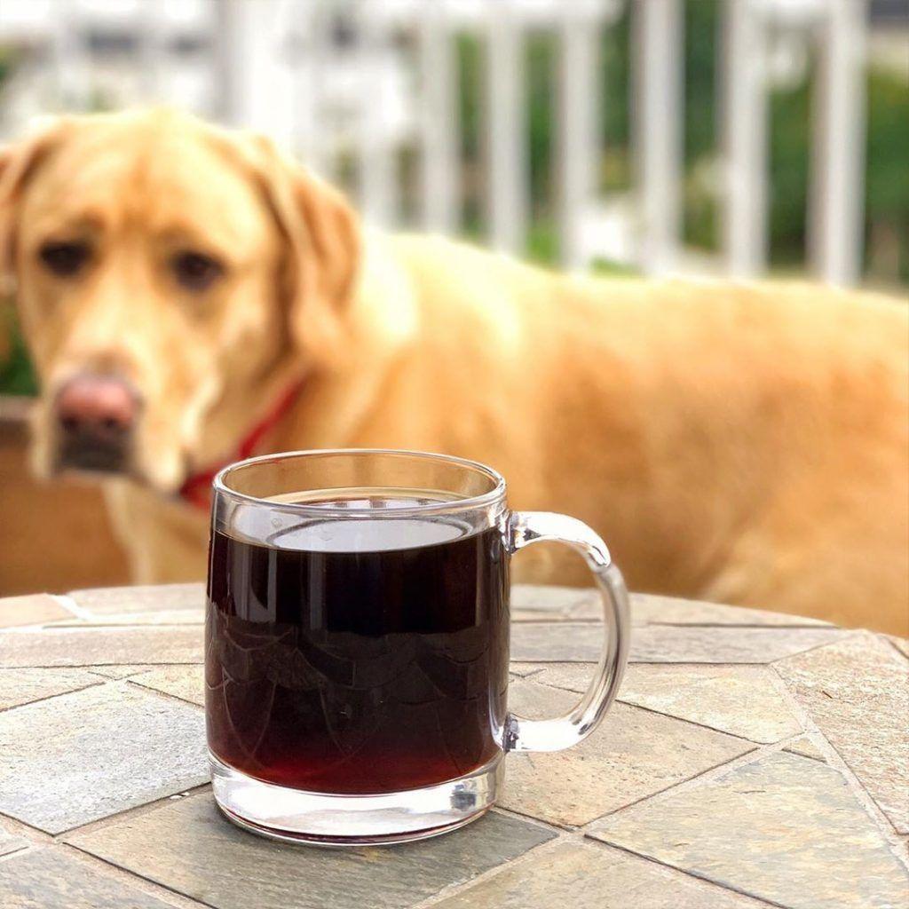 Coffee comparison coffee beans vs ground coffee coffee