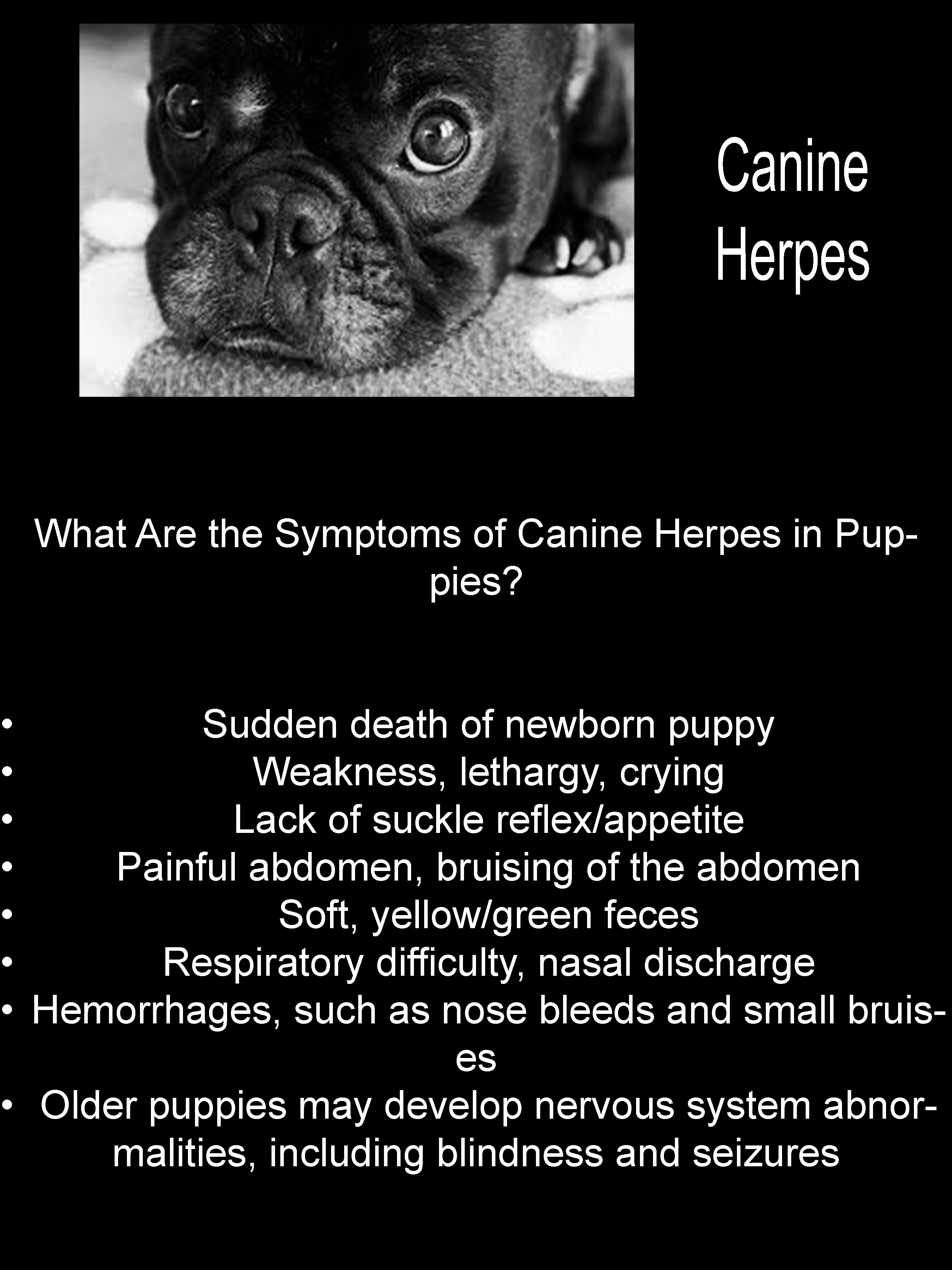 Pin on Canine Herpes Virus