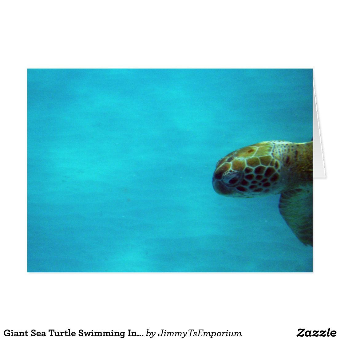 Giant Sea Turtle Swimming Into View Want To See More Great Items