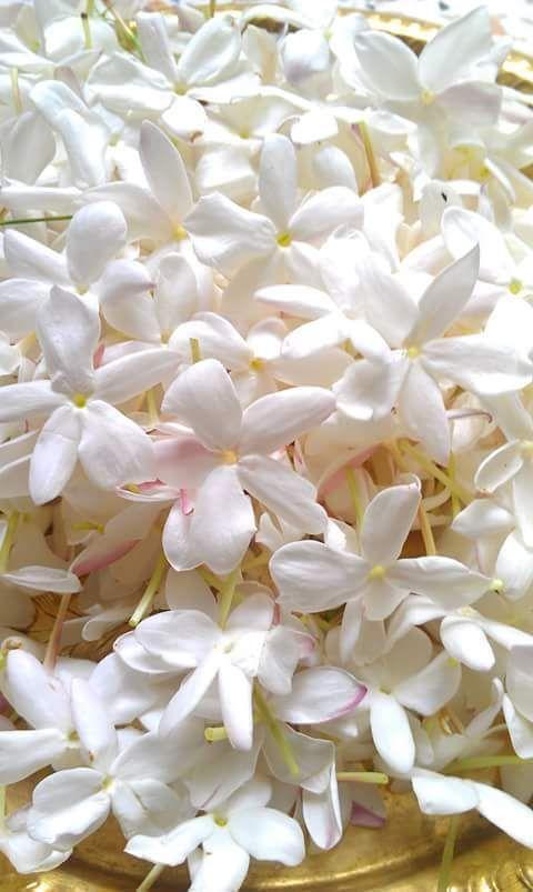 Pin On Lule Iphone jasmine flower wallpaper hd