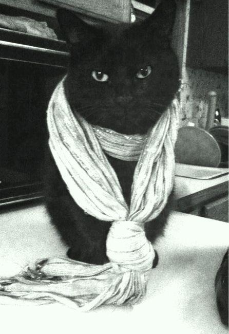 Black Cat Cute Cats Cute Cats And Dogs Black Cat