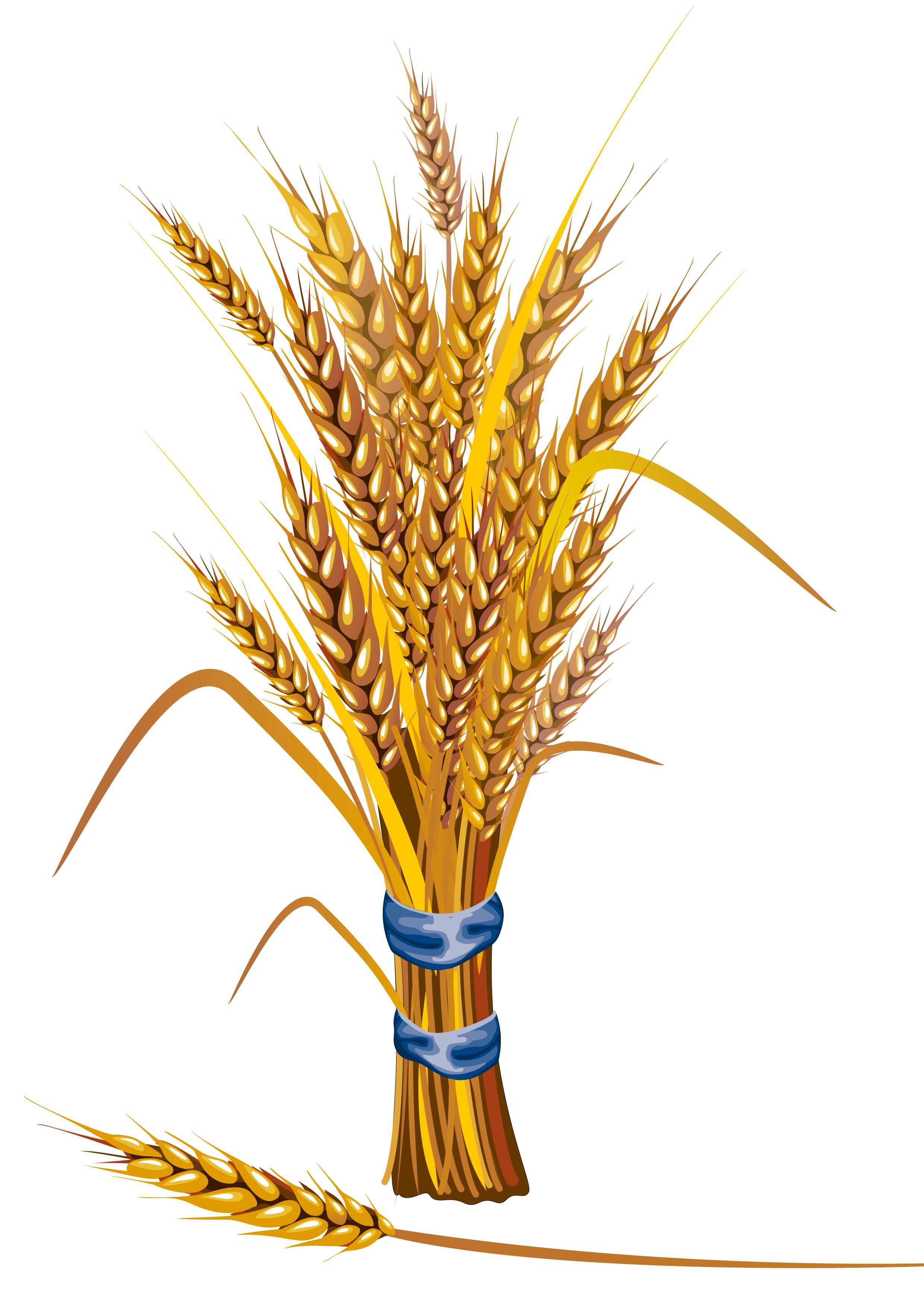 Wheat PNG Image Modern card design, Wheat, Illustration