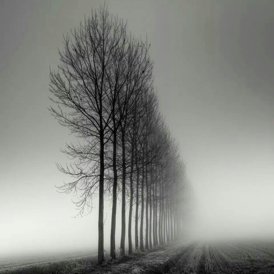 Arbres De Coto Photographie Noir Et Blanc Noir Et Blanc Photo Noir Et Blanc