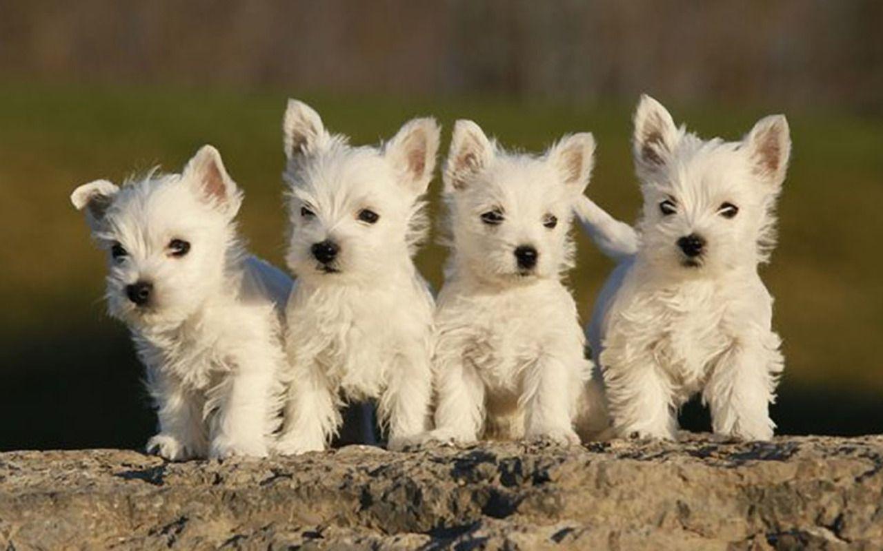 Little Sweethearts Dieren Nieuwe Puppy Baby Dieren