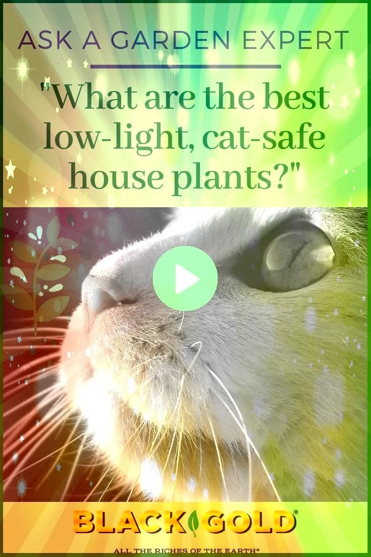CatSafe LowLight House Plants Question What are the best lowlight house plants that are cat safe Question from Margaret of Houston Texas Answer Each of these eight beauti...