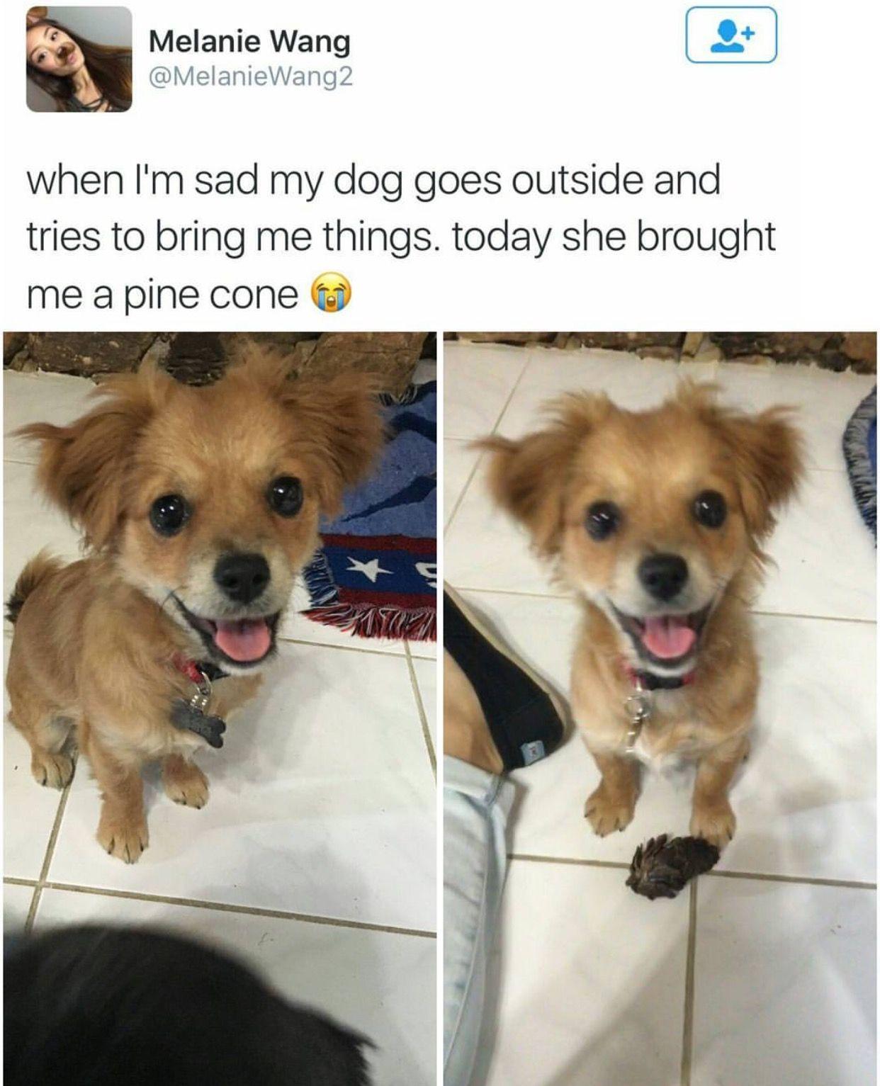 Pin By Astrid Illa On Doggies