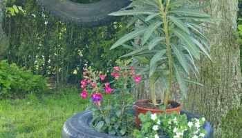 Ein Autoreifen als Blumenampel