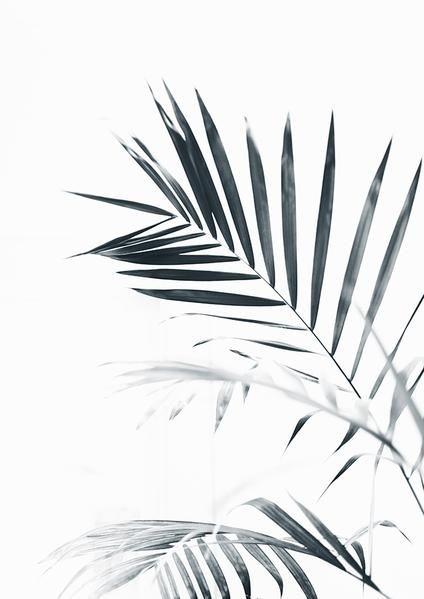 Art Tree Wallpaper Black And White