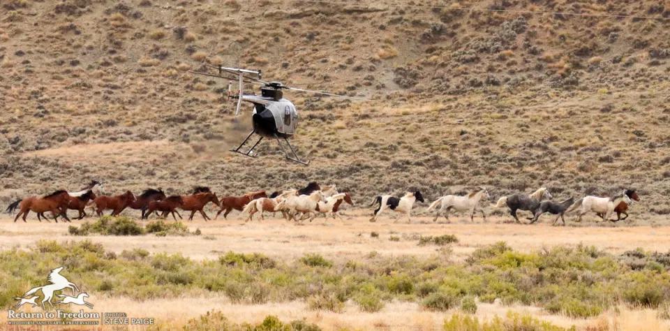 Blm Set To Start 2 400 Wild Horse Roundup On Red Desert Complex Wyo Return To Freedom Wild Horses Horses Wild