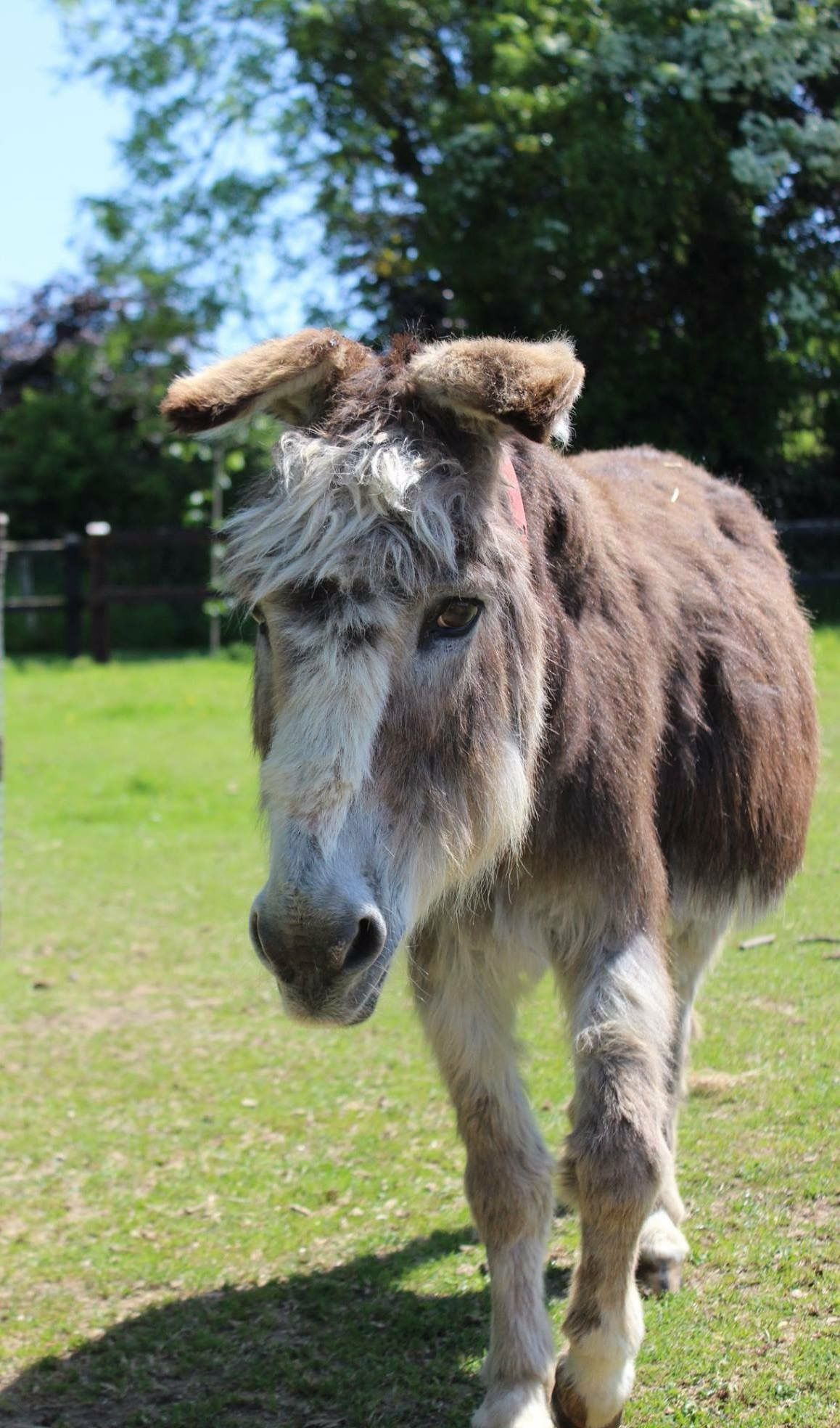 Lorcan from The Donkey Sanctuary Ireland ~ LORCAN is