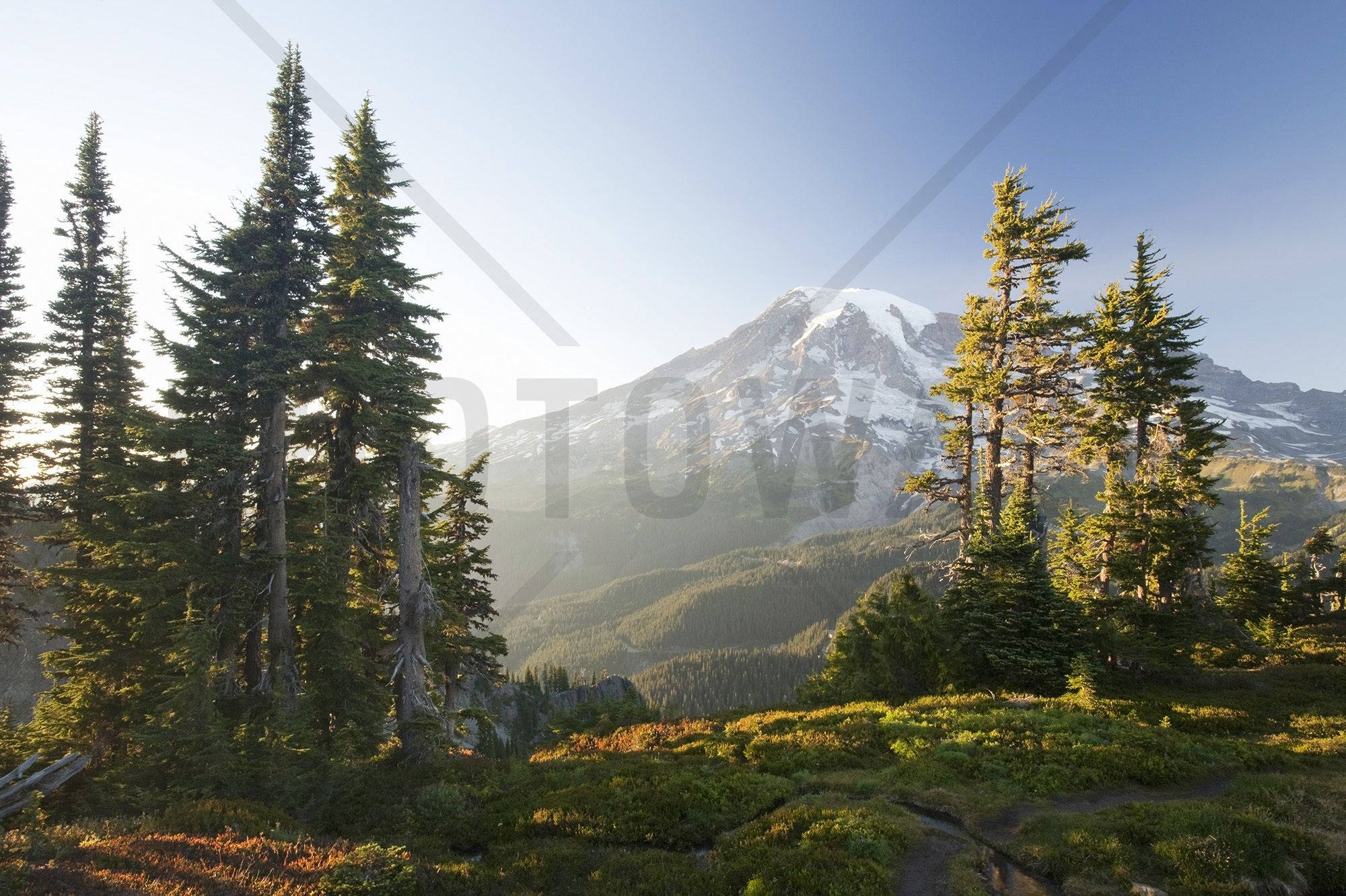 Mount Rainier And Alpine Forest At Sunset  Wall Mural