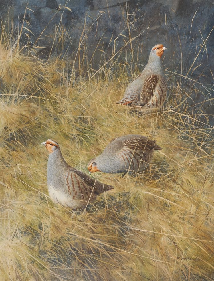 Best Rountree Tryon Mcphail Partridge Oil Bird Paintings 400 x 300