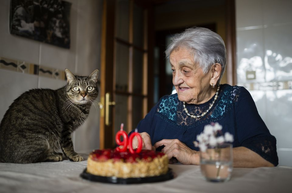 What Is The Average Lifespan Of A Cat Cats Feline Health Cat Years