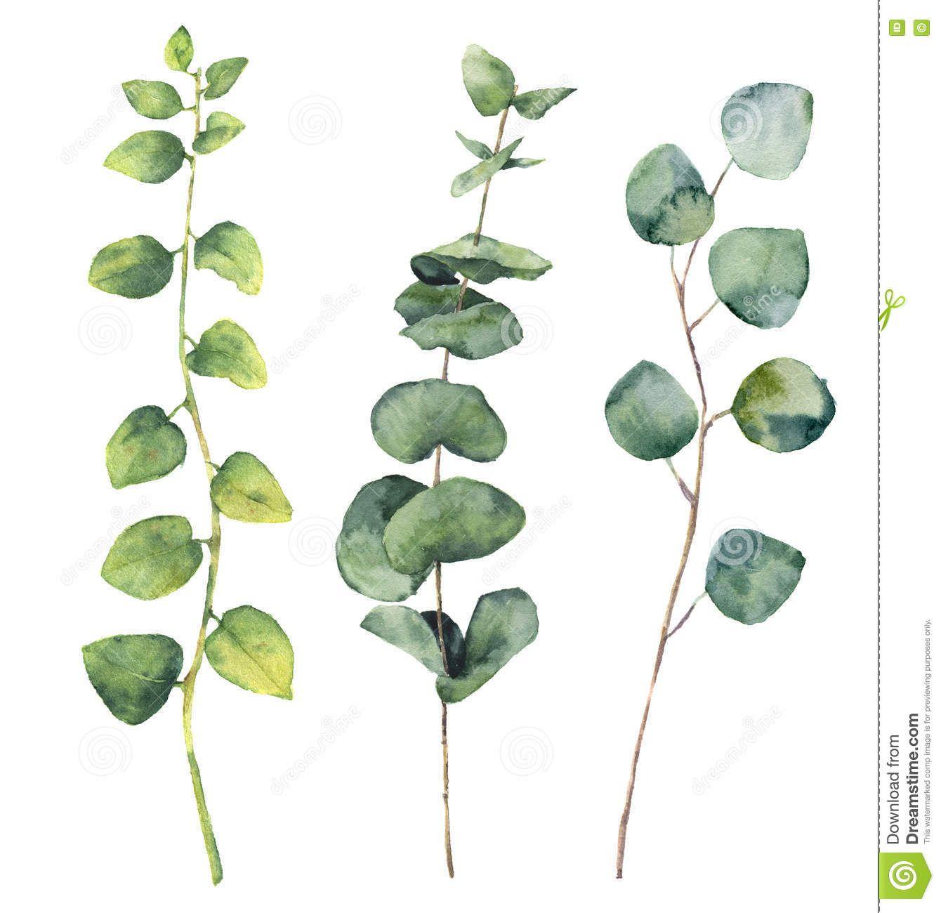 Feuilles D Eucalyptus D Aquarelle Et Branches Rondes De Brindille