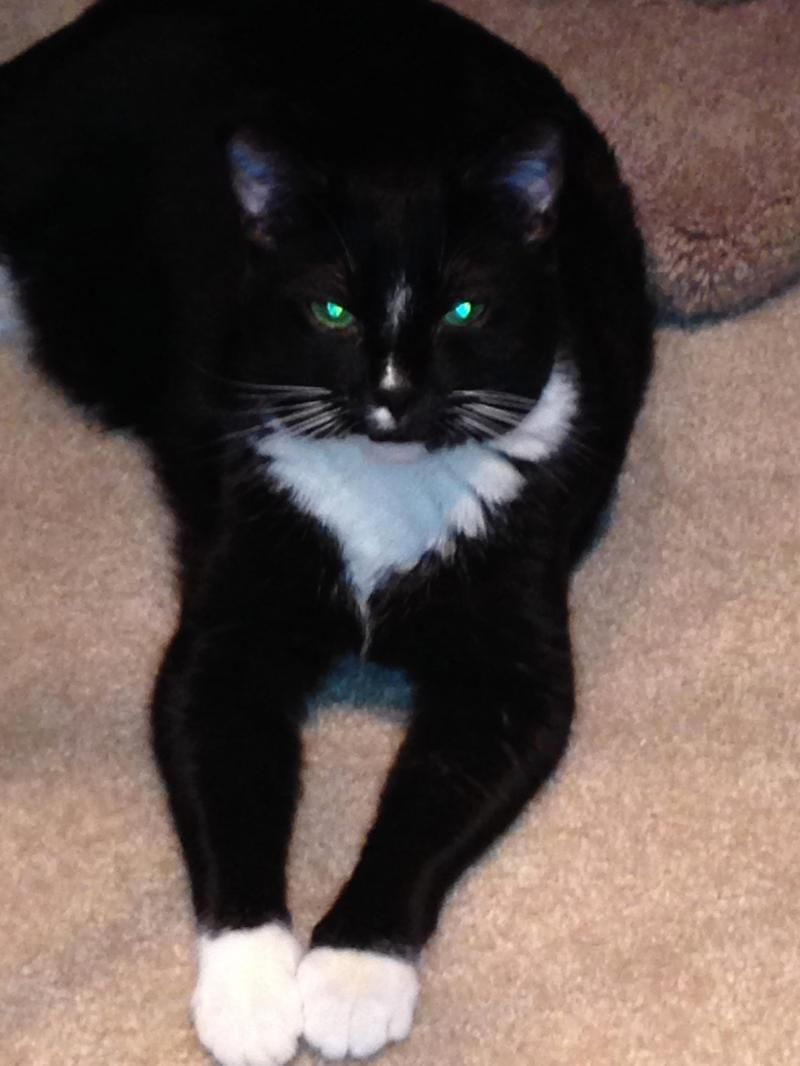 Adopt Zoey on (With images) Cat rescue, Animal rescue, Pets