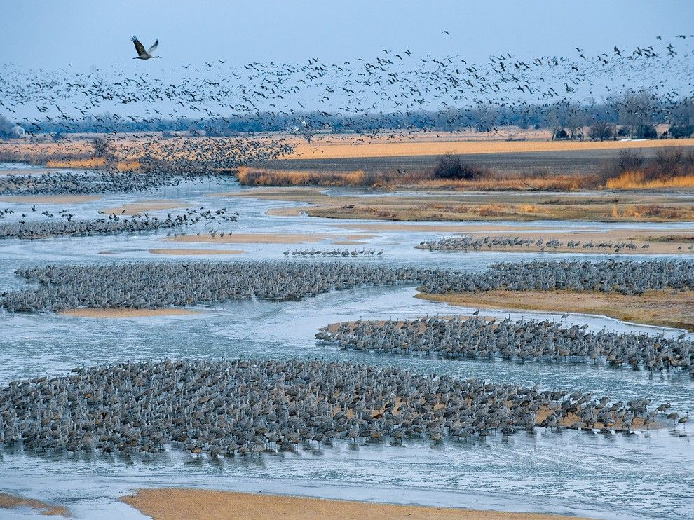 Sandhill Cranes Photo – Platte River Wallpaper – National Geographic Photo of the Day