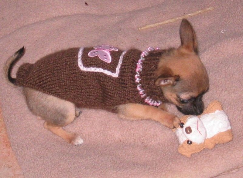 Comment tricoter un pull noir pour chien Chihuahua mon amour ...