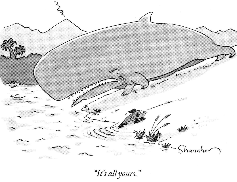Lesson Whale Evolution