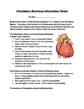 Circulatory System Brochure Circulatory System Worksheets And
