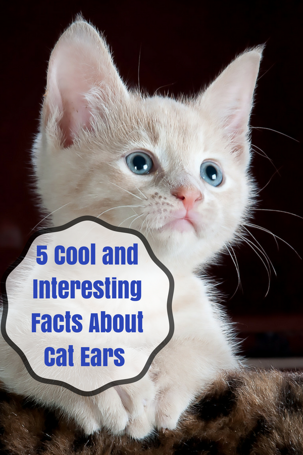 5 Cool and Interesting Facts About Cat Ears You May Not