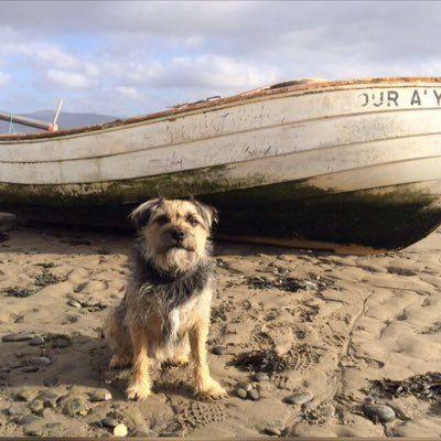Pippin Border Terrier Border Terrier Terrier Border Terrier Puppy