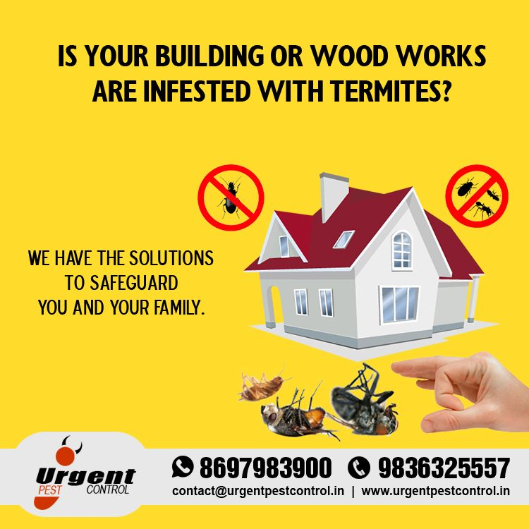 We Have The Solutions To Safeguard You And Your Family Pest Control Pest Control Services Solutions