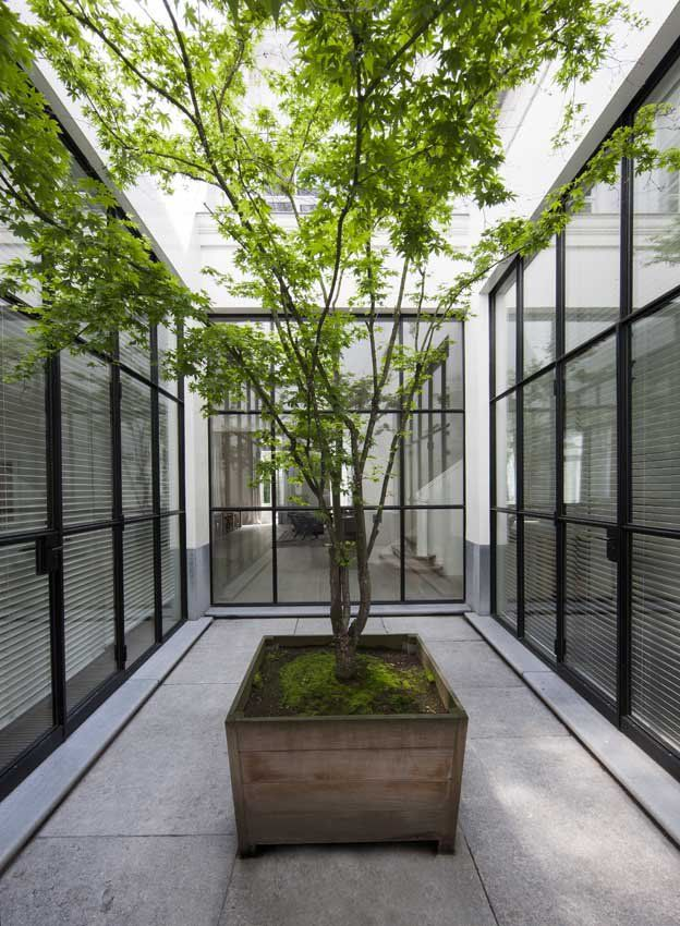 Courtyard with small tree adding a sense of nature for Atrium garden window