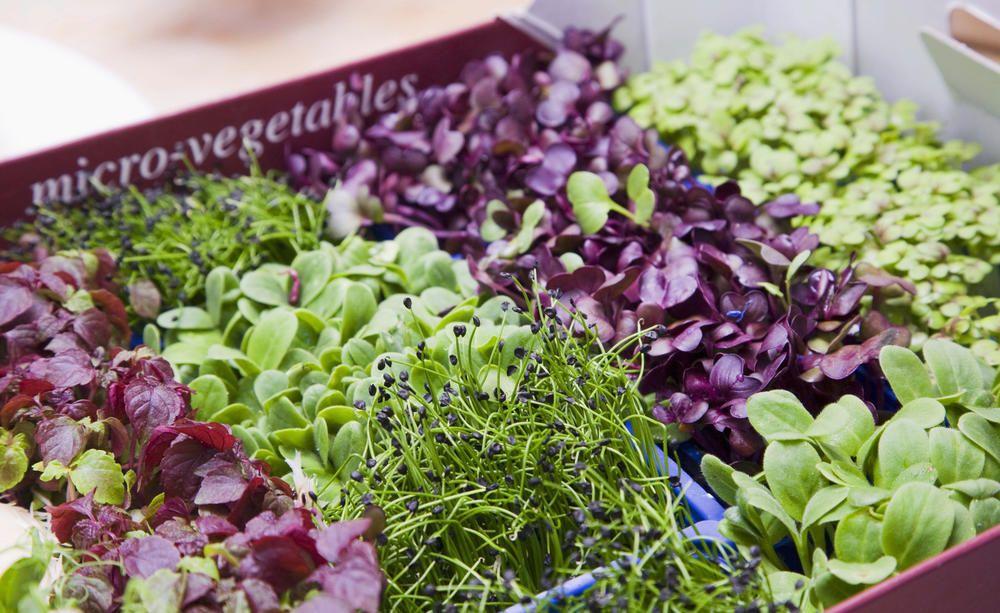 Gemüse Aussäen