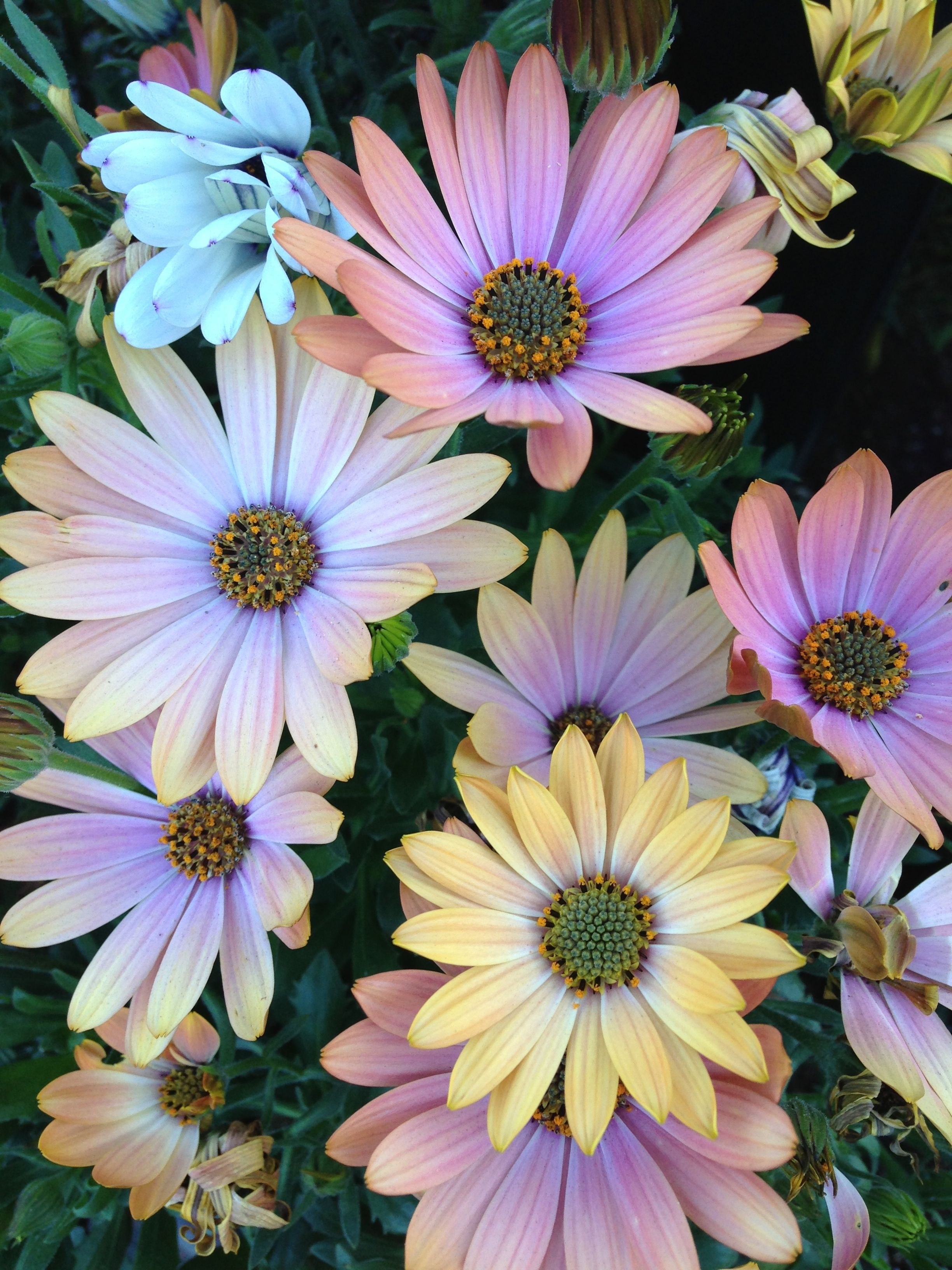 Pretty Little Flowers In The Line For Alcatraz Pictures Of Stuff