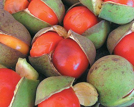 Australian native superfoods: rainforest tamarind The vibrantly ...