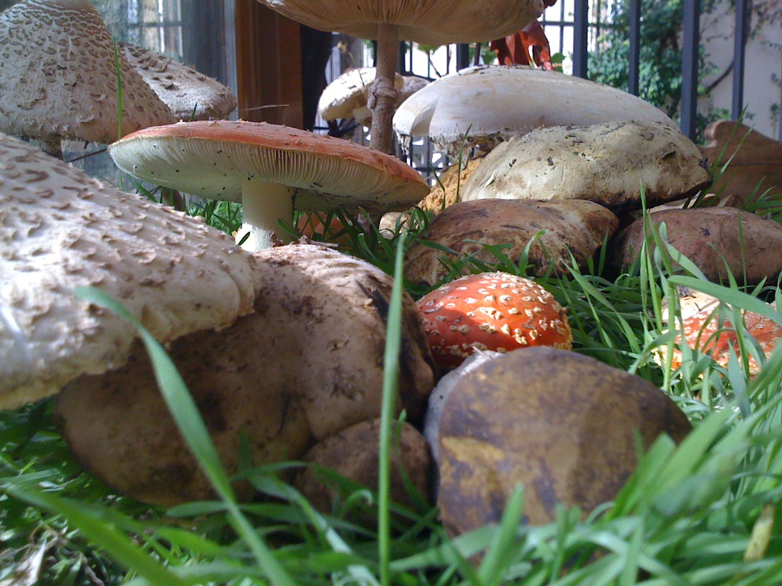 Exposición de hongos en el Restaurante La Muralla, Cañete (Cuenca)