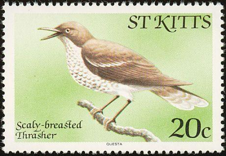 Scaly-breasted Thrasher (Allenia fusca)