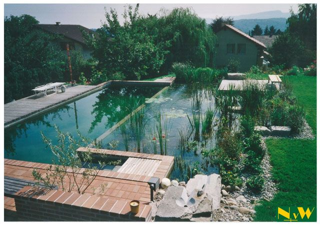 A Biopool --> A pool that relies on the natural filtration abilities of plants. No chemicals necessary, not to mention they're gorgeous!