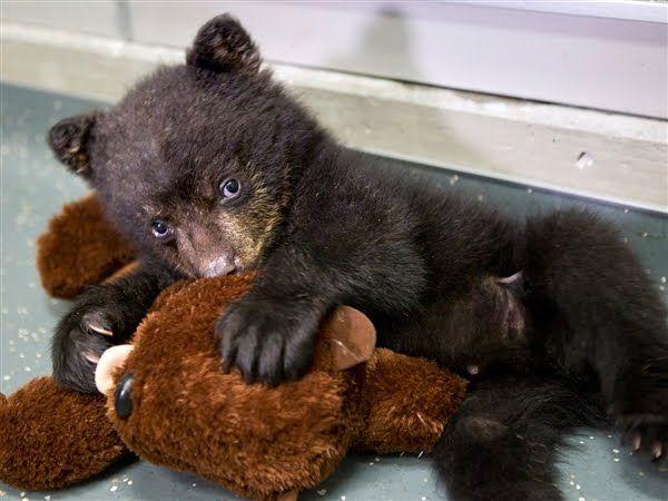 baby bear with a teddy bear