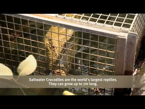 Outback Wildlife Rescue Episode 2