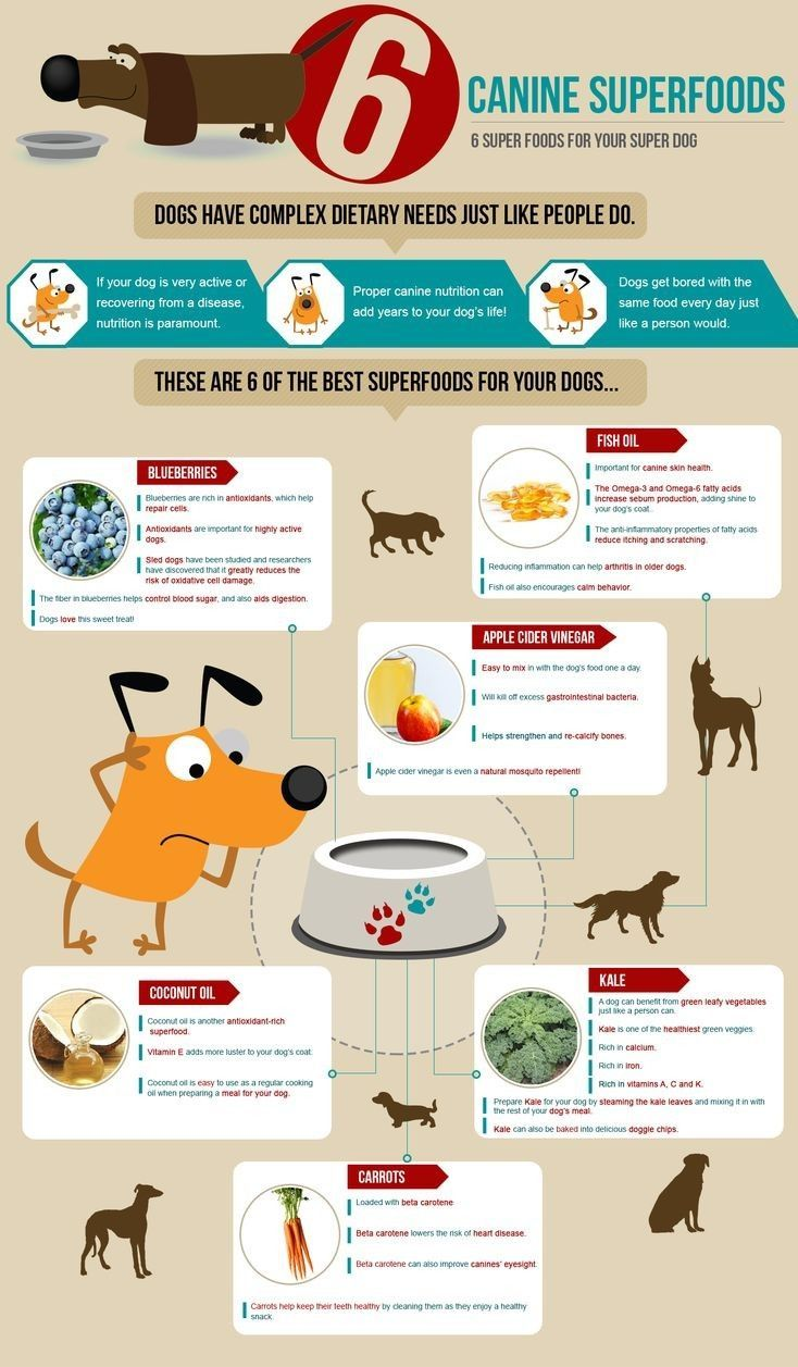 This Is The Ultimate Pet Nutrition Guide Filled With Pet Tips And Advice This Will Cover Everything From Diet T With Images Dog Nutrition Dog Food Recipes Dog Infographic