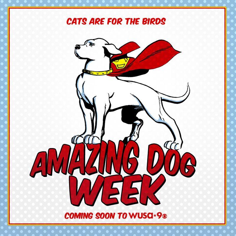 Amazing Dog Week for wusa9... krypto