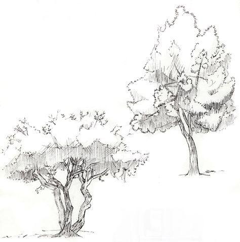 pin von uli endt auf zeichnen bungen pinterest zeichnen frei und b ume zeichnen. Black Bedroom Furniture Sets. Home Design Ideas