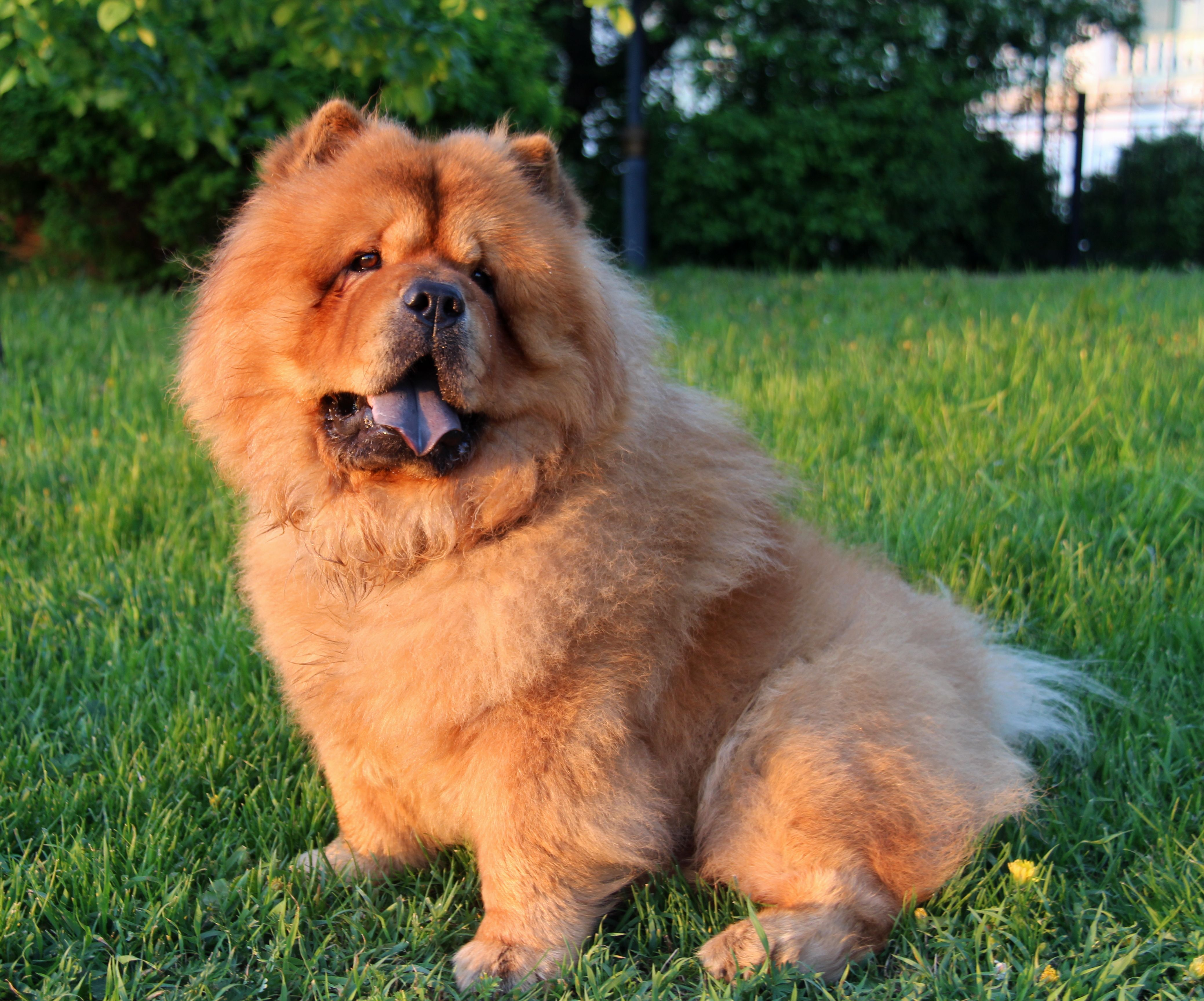 Most Attractive Dog Breeds Dog Breeds Cute Puppy Pictures Dogs