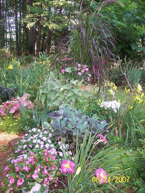 Thyme Ground Cover Perennials: Perennial Garden Love The Pretty Blue-ish Sedum!