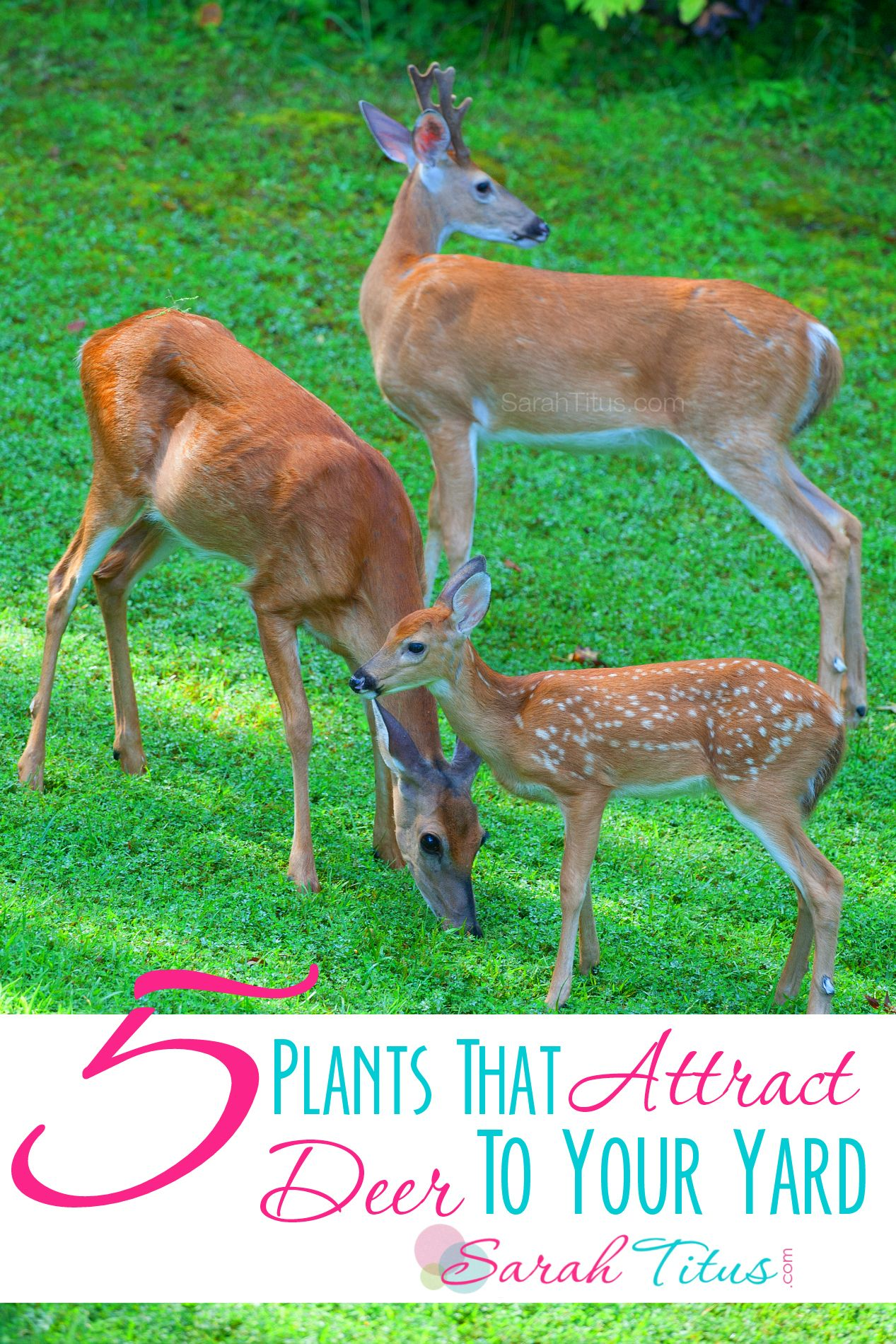 What Can I Feed Deer In My Backyard 5 plants that attract deer to your yard | garden diy | pinterest