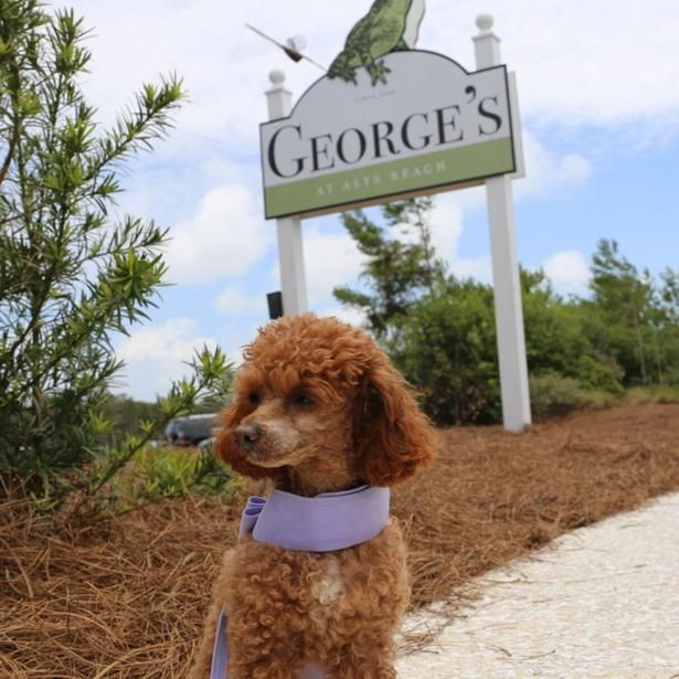 The Fresh Seafood At George S Will Not Disappoint A Dog Friendly